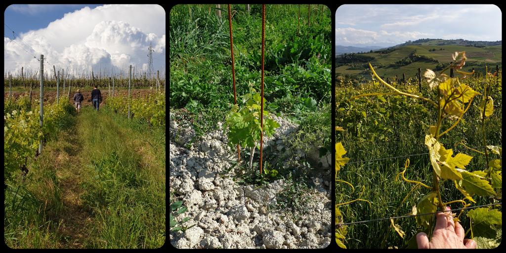 4 passi nel Roero con Alessandro Bovio vini naturali